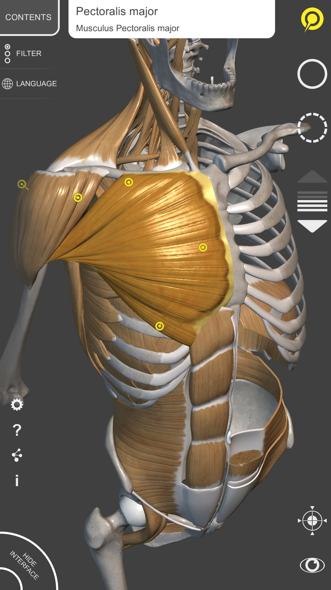 Amazon.com: 3D Anatomy for the Artist: Appstore for Android