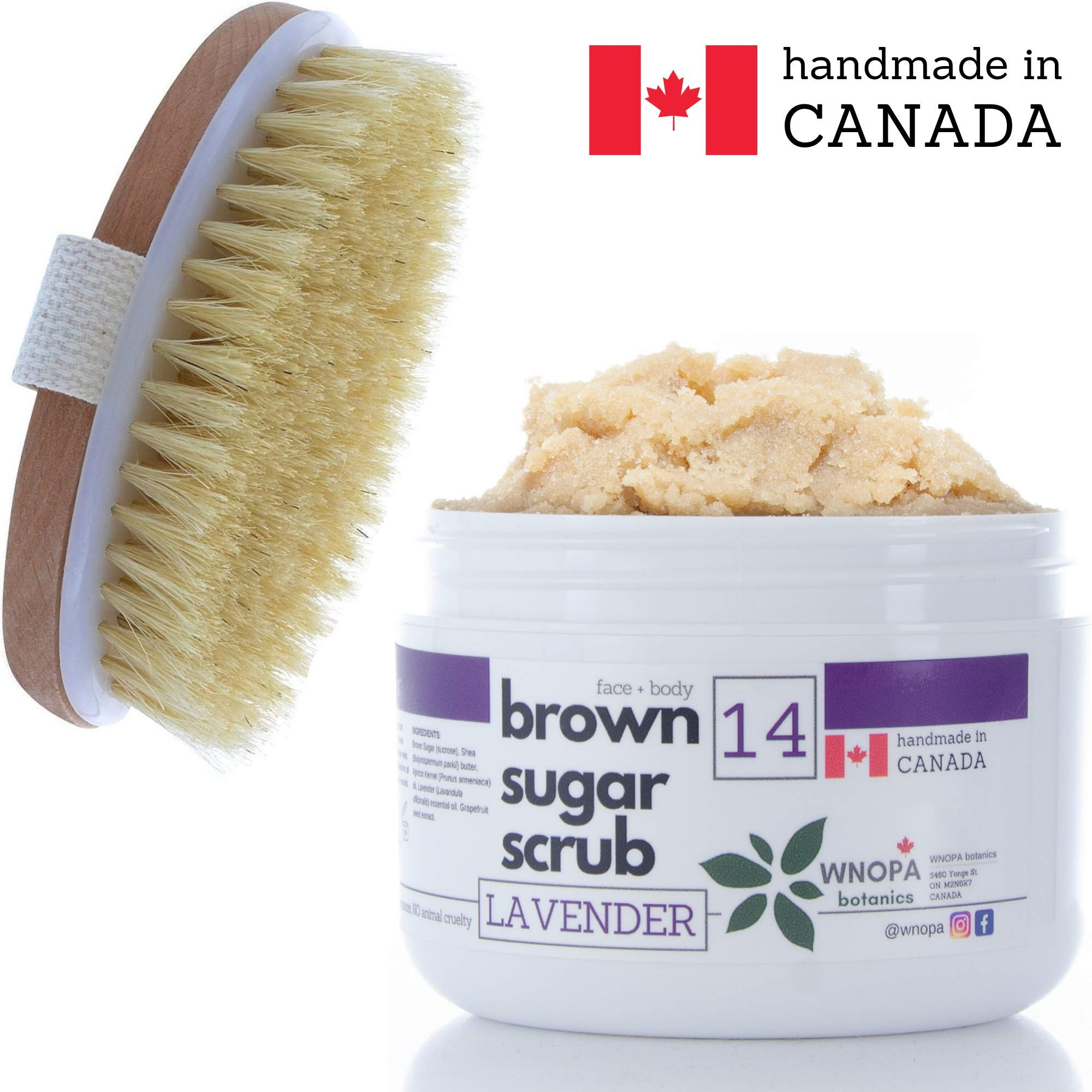 Sugar Scrub Body Exfoliator + Dry Brushing Body Brush - French Lavender Face Body Exfoliating Scrub with 100% Natural Botanics - Handmade in Canada - 10 oz + Body Scrub Brush (Lavender)