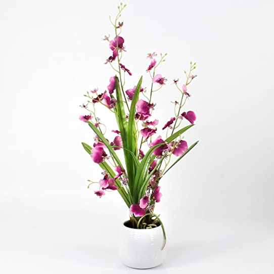 Orchidée Oncidium Décorative En Pot, 2 Tiges, Rose-Violet, 50 Cm