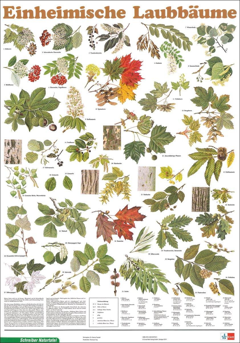 Heimische Pflanzen heimische pflanzen hausdesigns co