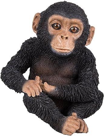 Vivid Arts Chimpanz/é Assis