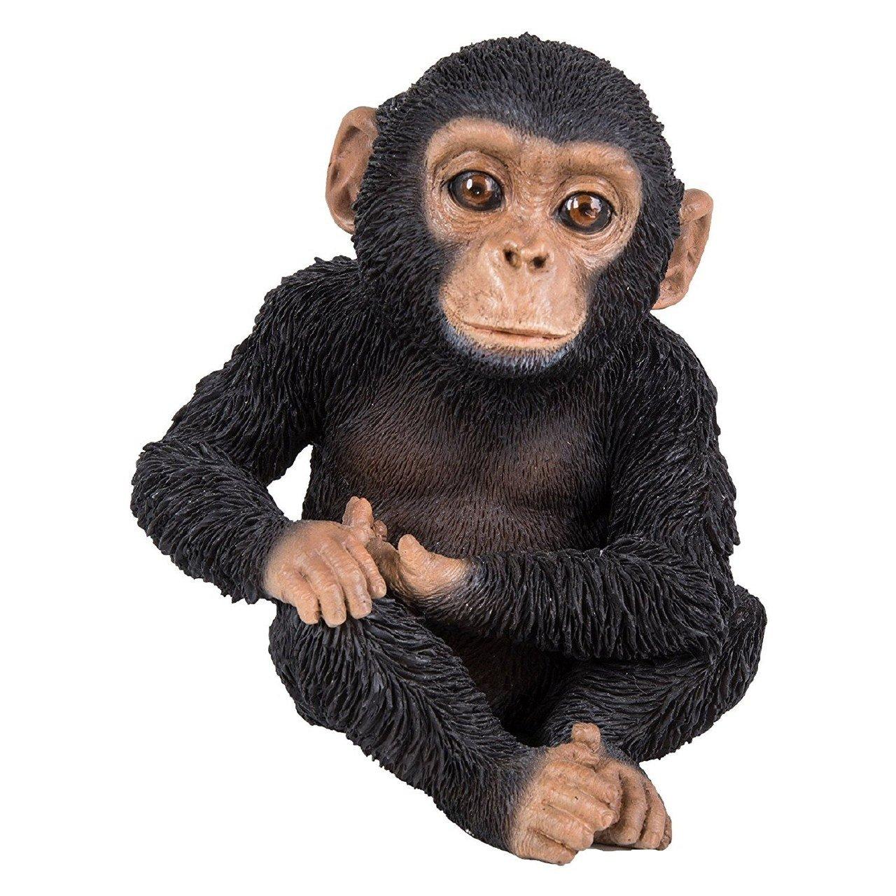 Vivid Arts XRL-NIM3-D Sentado chimpanc/é Ornamento de Resina