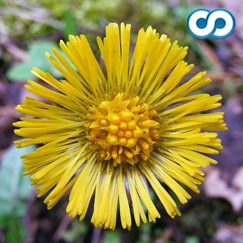 Flower Species Trivia Quiz