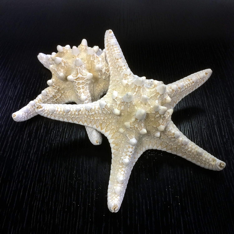 CYS EXCEL 5 inch to 6 inch Starfish, 8 Pcs Colorful Beach Starfish, Natural Starfish Perfect Accents Nautical Decor,Home Decor, Beach Theme Party Wedding Decoration (Big Starfish Fuchsia)