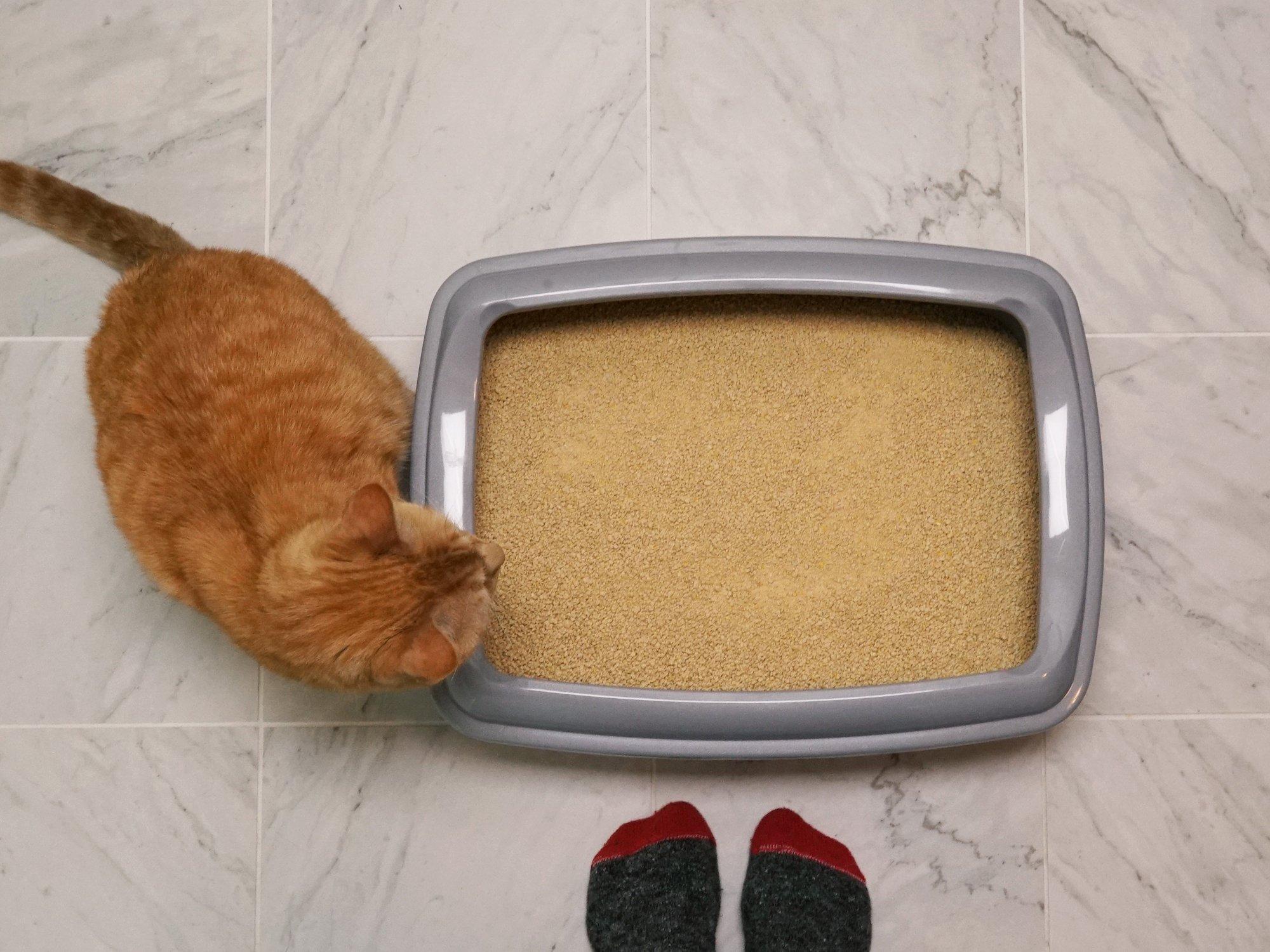 World's Best Cat Litter, Clumping Litter Formula for Multiple Cats, 28-Pounds by World's Best Cat Litter