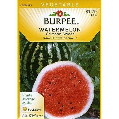 Burpee 64899 Watermelon Crimson Sweet Seed Packet : Fruit Plants : Garden & Outdoor
