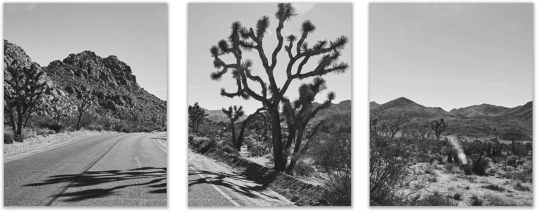 Set of 3 Joshua Tree Series II