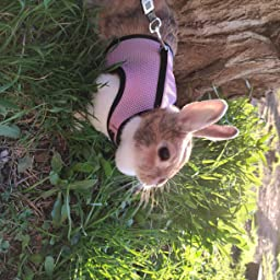 UEETEK El arnés suave del animal doméstico con el plomo para conejos Los conejitos pequeños del conejito, apoyan los animales domésticos Peso 1.5lbs-4lbs, tamaño L (color de rosa): Amazon.es: Hogar