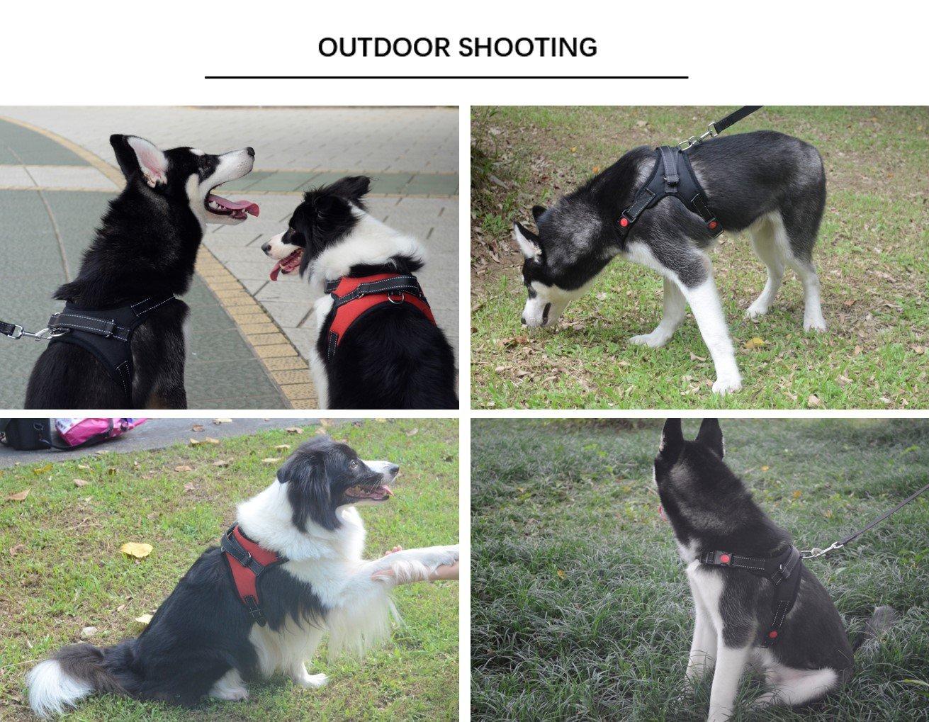 Pawya - Arnés y correa para perro, resistente, sin tirones ...