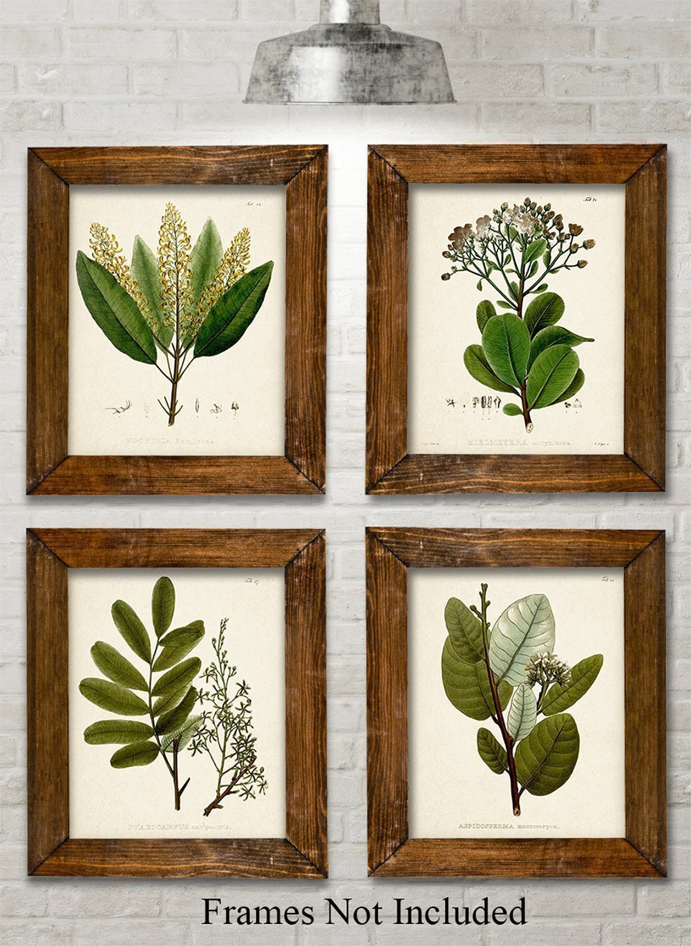Green Botanical Art Prints - Set of Four Prints (8x10) Unframed - Great Kitchen Decor and Gift for Nature Lovers by Personalized Signs by Lone Star Art