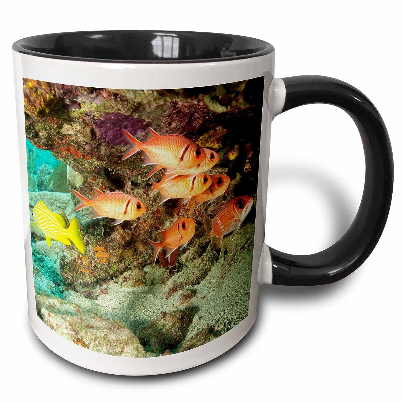 Tortola 3dRose mug/_72033/_4Soldierfish grunts Stuart Westmorland Two Tone Black Mug Multicolor 11 oz BVI-CA10 SWS0008