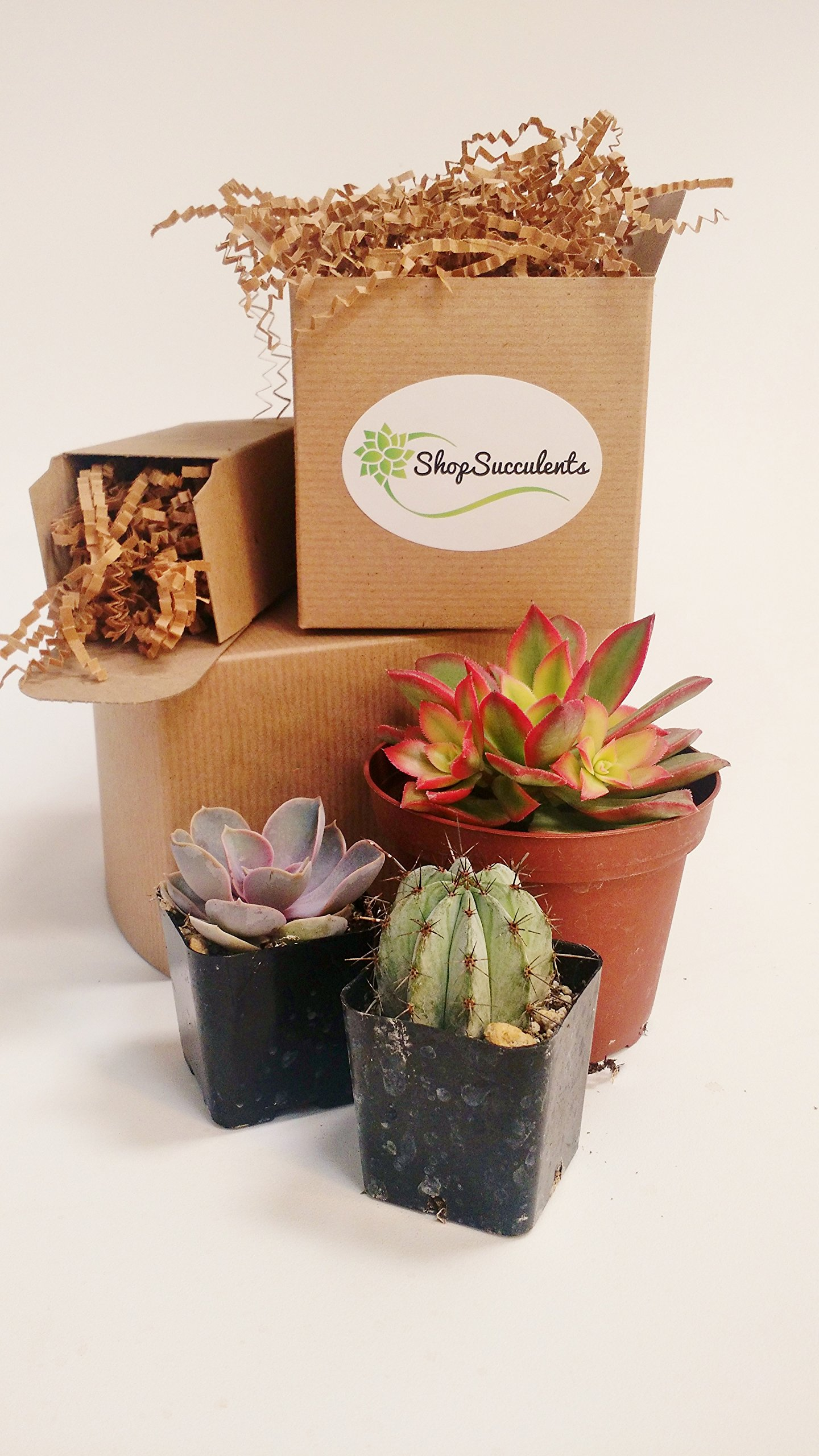 256 Beautiful Succulent Wedding Favors and Gifts plants