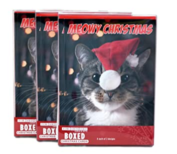 Amazon Com Merry Christmas Holiday Greeting Cards Adorable Cat And