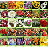 Creative Farmer Flower Seeds : Garden Seeds For Basket Combo of 30 Packet of Seeds Winter/Summer & All Season Garden Flower Seeds Pack By CreativeFarmer