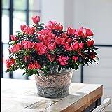 2 Pack Flower Pots Metal Galvanized Garden Decor Planters, 9 Inch, Indoor and Outdoor, Silver