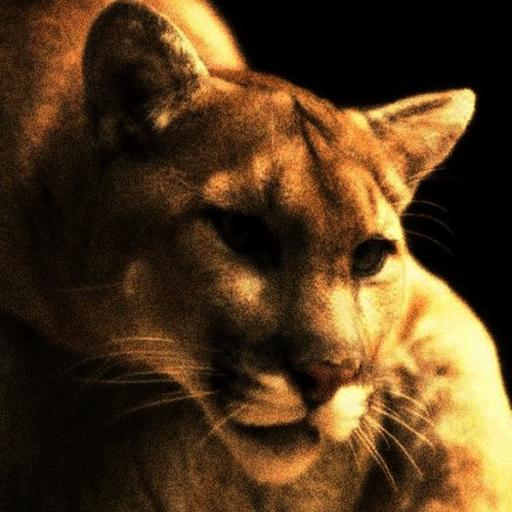 Mountain Cat 's - The Wild