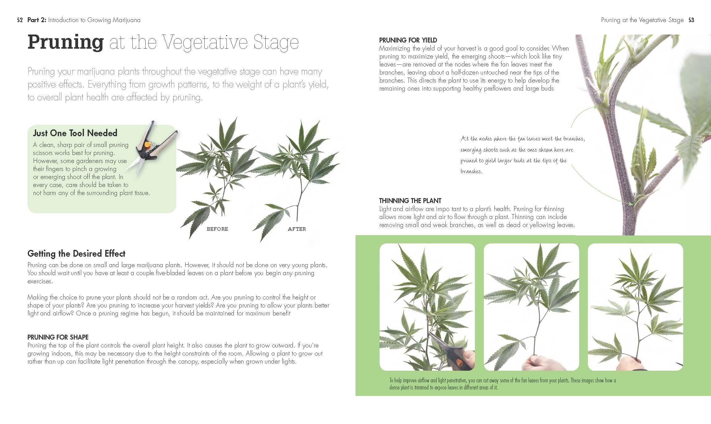 Amazon growing marijuana idiots guides 9781615648948 amazon growing marijuana idiots guides 9781615648948 kevin oliver chadd mckeen books nvjuhfo Image collections