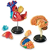 Learning Resources Anatomy Models Bundle