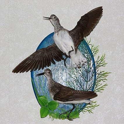 Birds For Sale >> Amazon Com Pair Of Birds Taxidermy Bird Mount Stuffed Bird For