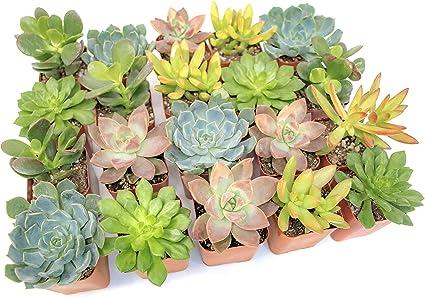 living succulent planter succulent garden Succulent terrarium live cacti and succulent planter