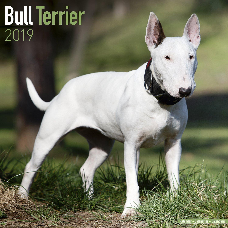 Bull Terrier Calendar - Dog Breed Calendars - 2018 - 2019