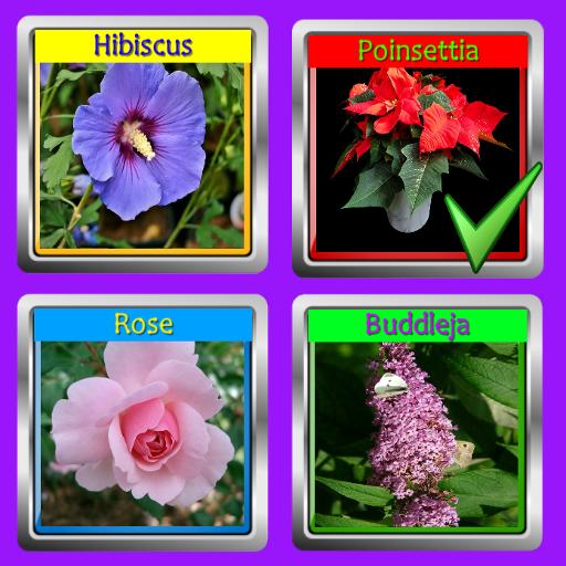 The Garden Quiz: Flowers Pro ()