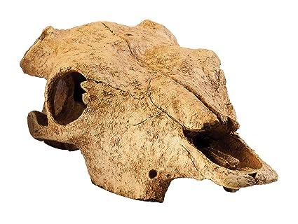 Amazon Com Exo Terra Buffalo Skull Terrarium D Pet Terrariums
