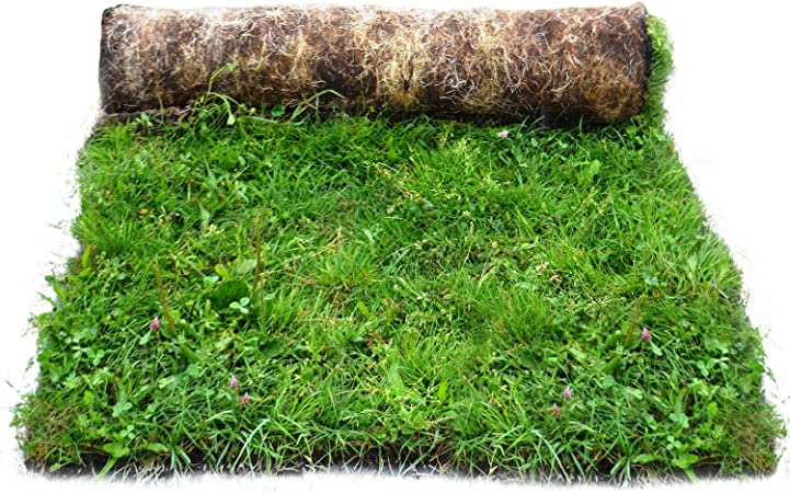 Meadowmat Traditional Meadow Wildflower Turf, Multi-Colour, 5 m² ...