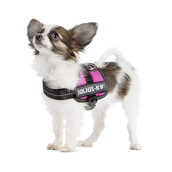 Trixie Julius K9 de alimentación/arnés del Perro, Small-Parent ...