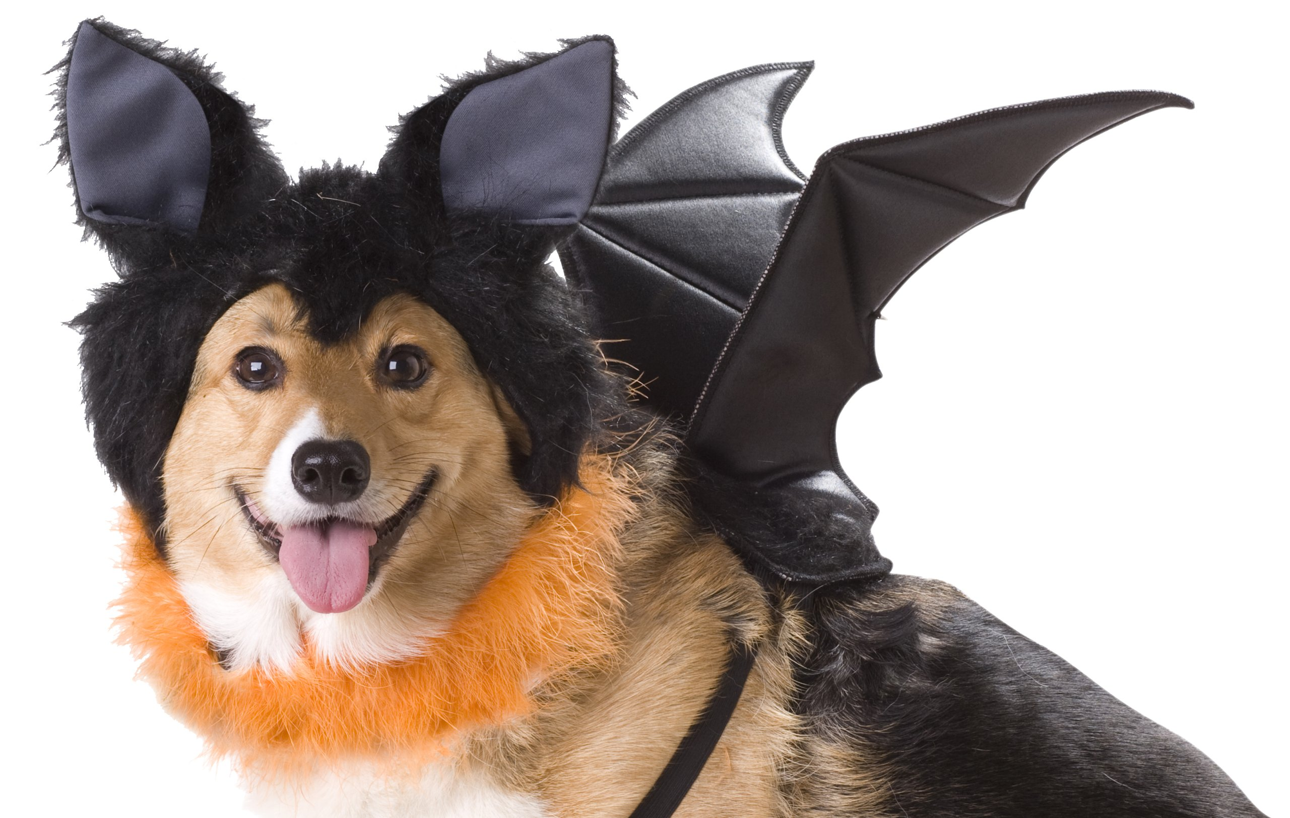 Animal Planet PET20103 Bat Dog Costume, X-Small