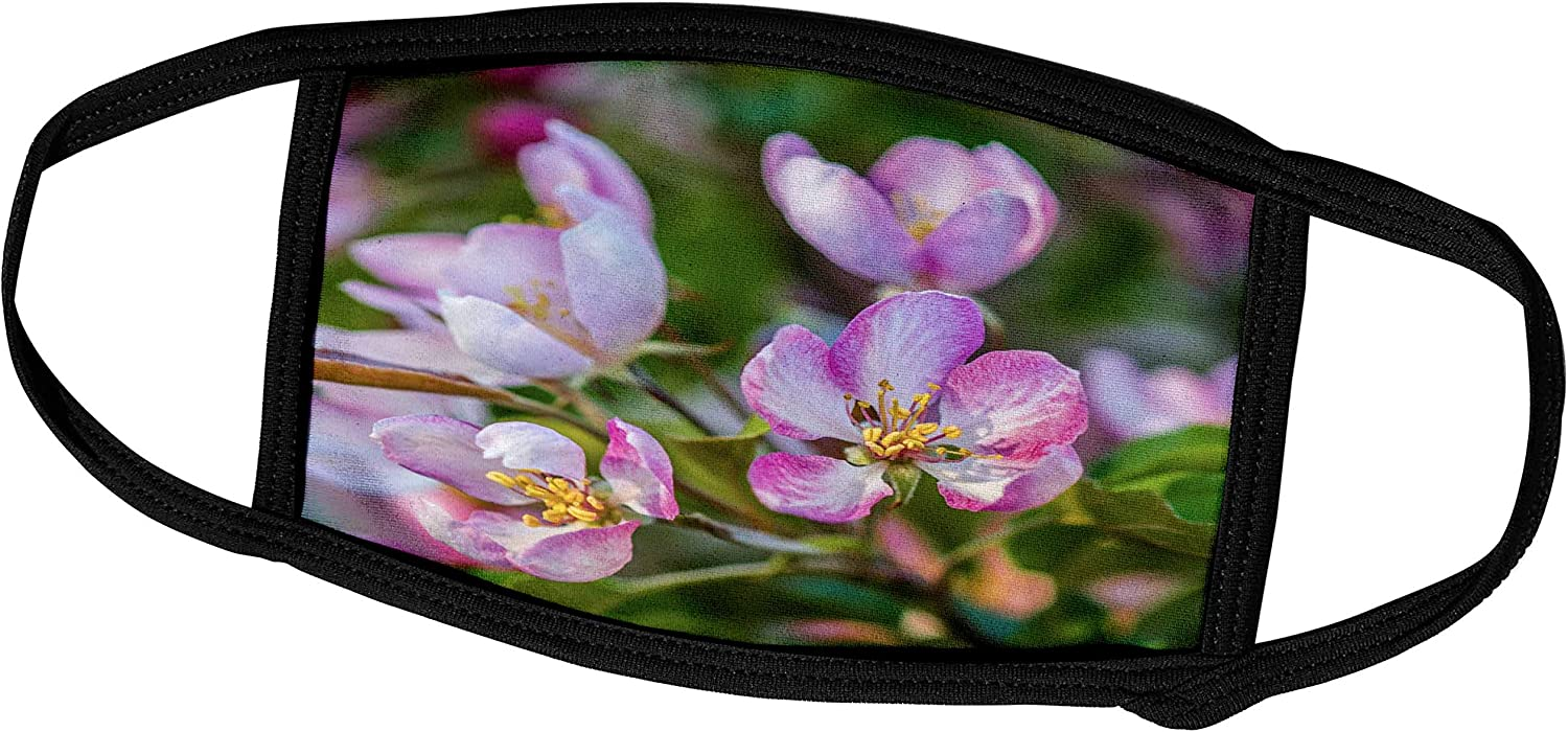3dRose Pink, Yellow, Green Colors of a crabapple Tree in Bloom. Floral. - Face Covers (fc_288809_2)