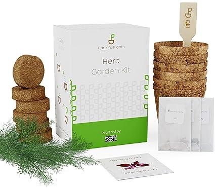 daniels plants herb garden kit indoor herb planters for purple basil parsley dill - Indoor Herb Garden Kit