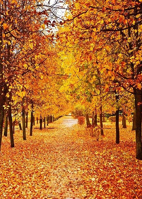 Arbre automne couleurs fort image nature orange t - Paysage d automne dessin ...