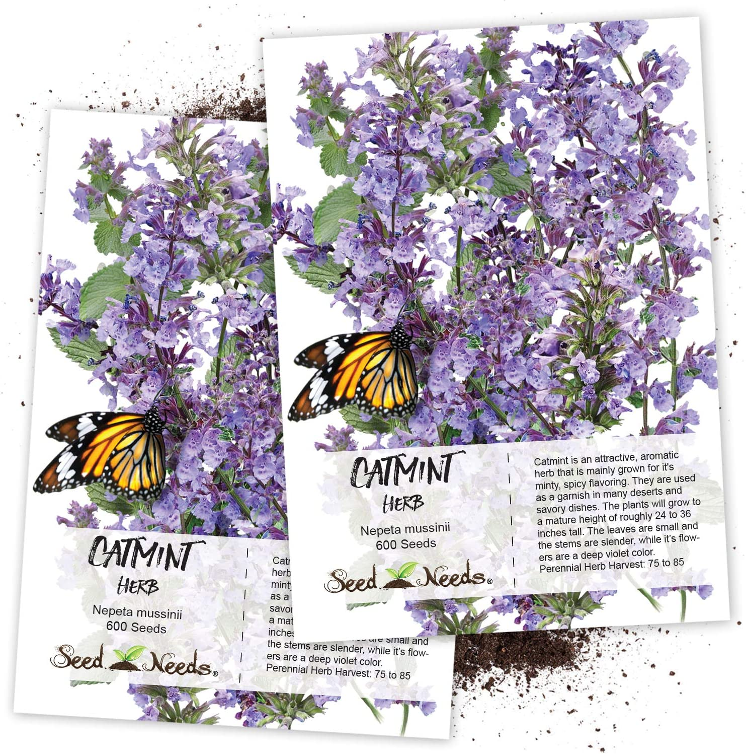 Amazon Com Seed Needs Catmint Herb Nepeta Mussinii Twin Pack