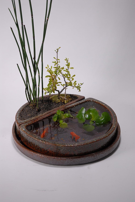 ミニビオトープ3点セット(焼〆) (信楽焼陶器水鉢めだか鉢メダカ鉢睡蓮鉢蓮鉢植木鉢Y) B01L7Q111W