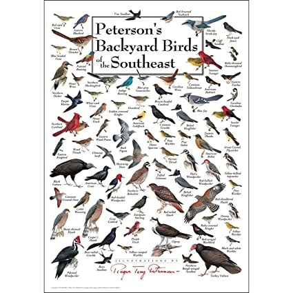 Attractive Earth Sky U0026 Water Poster   Petersonu0027s Backyard Birds Of The Southeast