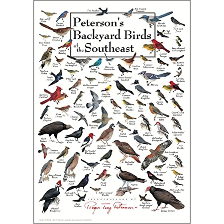 Earth Sky Water Poster – Peterson s Backyard Birds of the Southeast