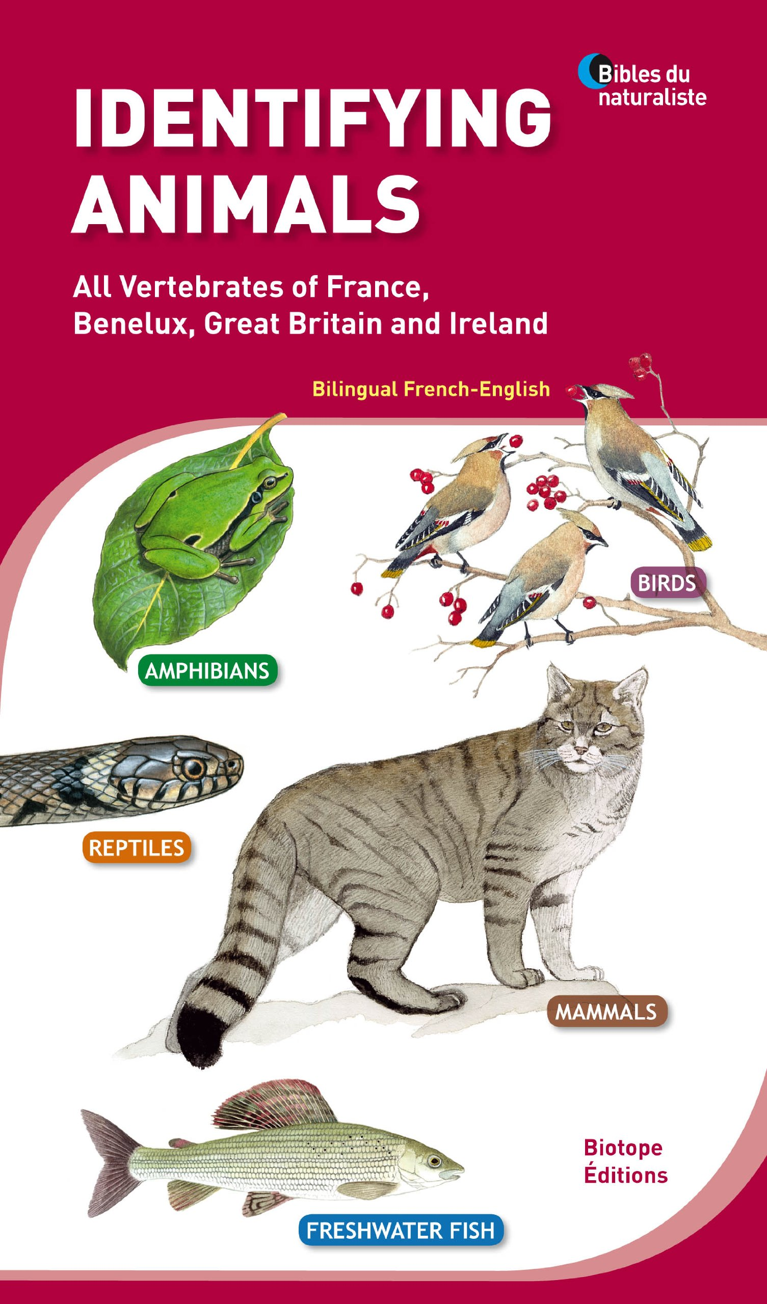 Read Online Identifying Animals: All Vertebrates of France, Benelux, Great Britain and Ireland PDF