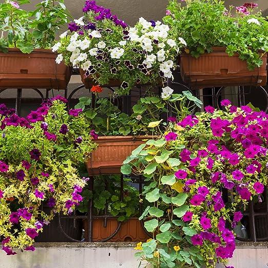 Balcón Semillas de mezcla de plantas: Amazon.es: Jardín