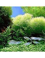 quanjucheer 1000PCS acquario pianta semi misti semi di erba acqua erba subacquea Decor Foreground