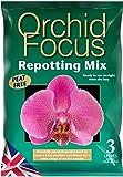 Growth Technology - Orchid Focus, Miscela di terriccio per il rinvaso di orchidee, 3 l
