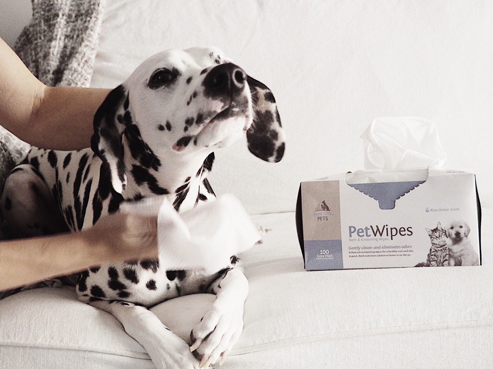 Professional Pet Grooming Wipes for Dogs and Cats, 100 Count, 100% Natural & Organic Extracts, Extra Thick Cloths, Ultra Soft, Extra Large, Hypoallergenic, Cruelty Free & Vegan - Park City Pets by Park City Pet (Image #7)