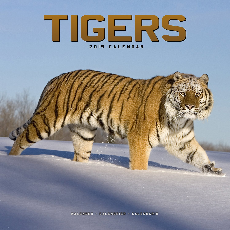 Calendario Tiger 2019.Tiger Calendar Calendars 2018 2019 Wall Calendars