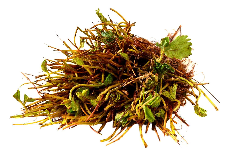 Amazon.com : 9Greenbox Bareroot Plants, Everbearing Strawberry, 3 ...