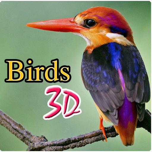 Birds 3d (Bird Games compare prices)