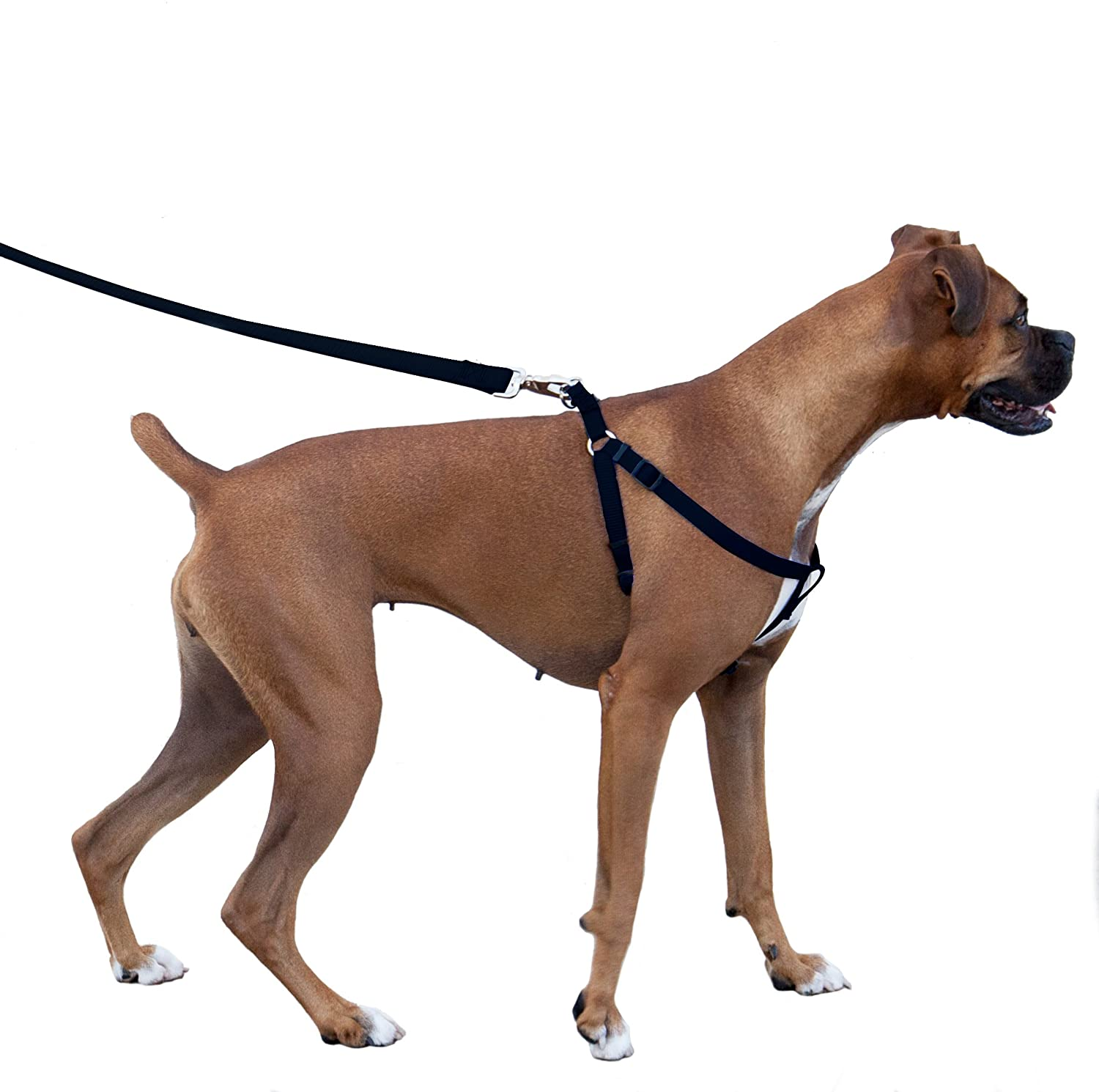 The Best No Pull Dog Harness 3