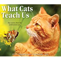 Image for What Cats Teach Us 2021 Box Calendar