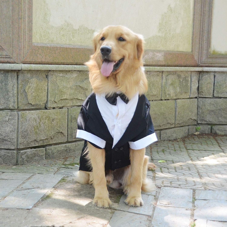 longlongpet - Traje Formal para Perro con Pajarita Negra para ...