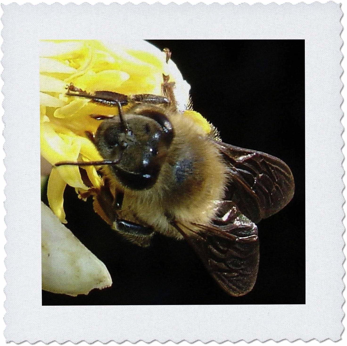 """3dRose Honey Bee on Lemon Blossom Bee, Blossom, Flower, Honey Bee, Honeybee, Insect, Lemon Tree Quilt Square, 6 by 6"""""""