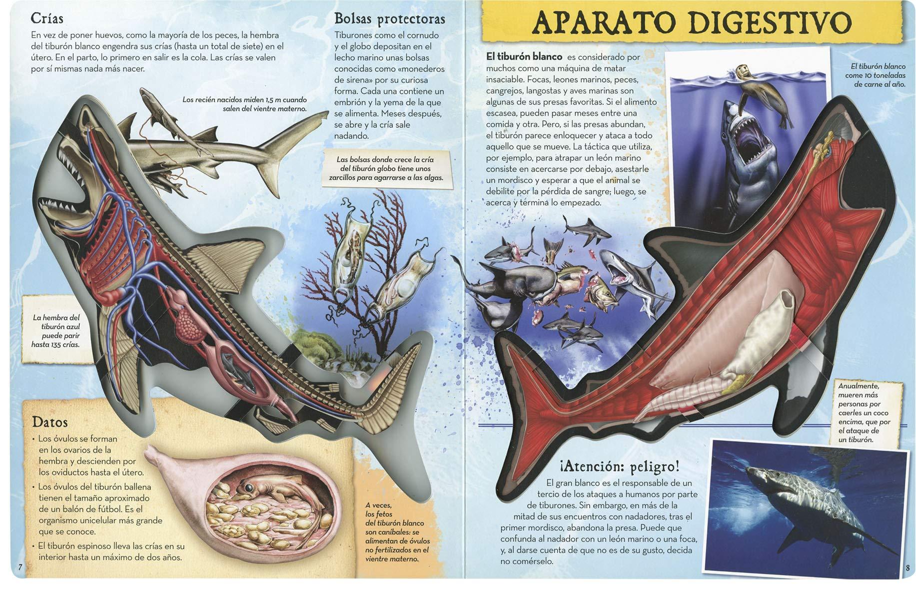 Tiburón (Viaja al interior de...): Amazon.es: David George ...